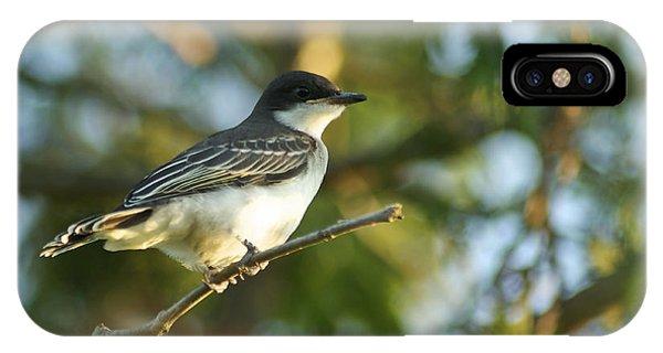 Gazing Eastern Kingbird  IPhone Case