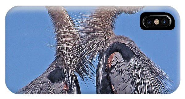 Great Blue Heron The Face Off IPhone Case