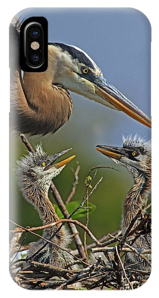 Great Blue Heron Twins IPhone Case