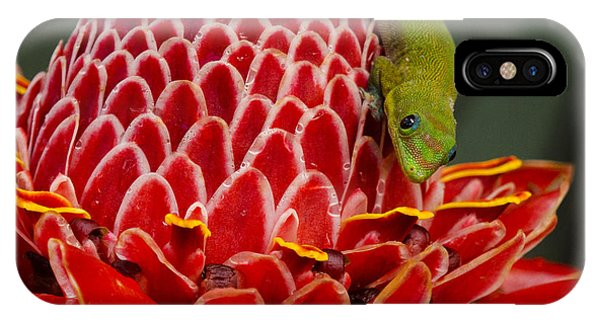 Gecko On Red Ginger IPhone Case