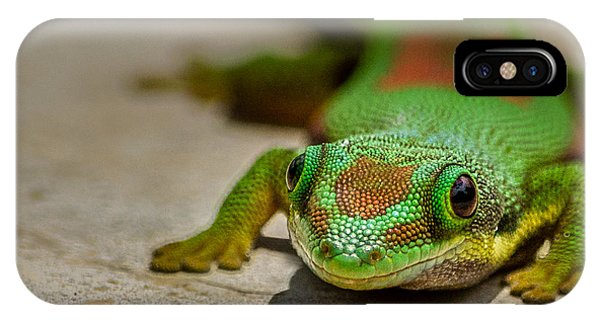 Gecko Portrait IPhone Case