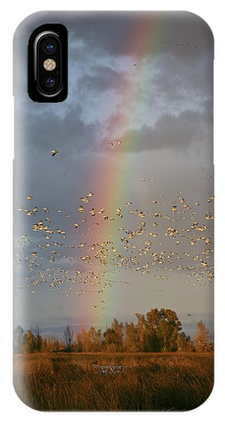 Geese And Rainbow IPhone Case