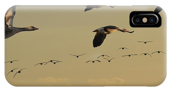 Geese Charter IPhone Case