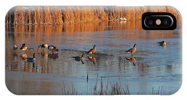 Geese In Wetlands IPhone Case