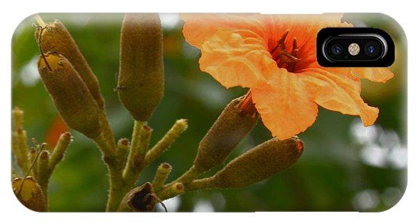 Oranger iPhone Case - Geiger Tree - Geiger Flower by Greg Thiemeyer