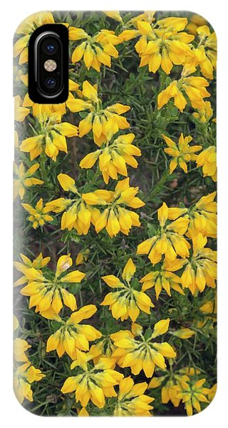 Deciduous iPhone Case - Genista Hispanic by Geoff Kidd/science Photo Library