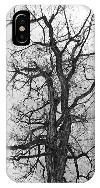 Genoa Tree IPhone Case