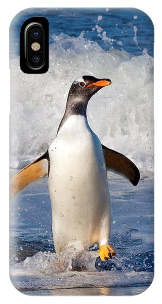 Gentoo Ashore IPhone Case