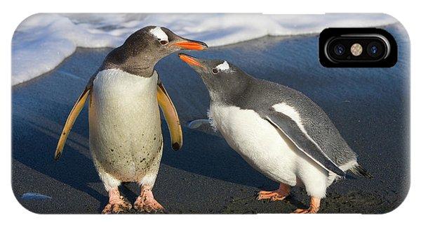 Gentoo Penguin Chick Begging For Food IPhone Case
