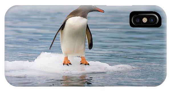 Gentoo Penguin On Ice Floe Antarctica IPhone Case