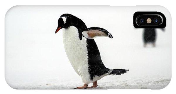 Behaviour iPhone Case - Gentoo Penguins (pygoscelis Papua) by Photostock-israel