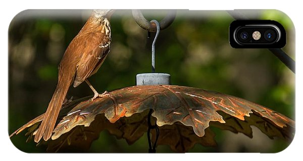 Georgia State Bird - Brown Thrasher IPhone Case