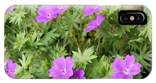 Hybrid iPhone Case - Geranium 'wisley Hybrid' by Anthony Cooper/science Photo Library
