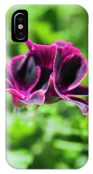 Geraniums (pelargonium Sp.) Phone Case by Gustoimages/science Photo Library