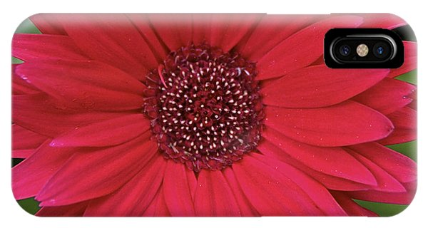 Gerber Daisy In Red IPhone Case