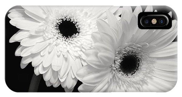 Gerbera Daisy Sisters IPhone Case