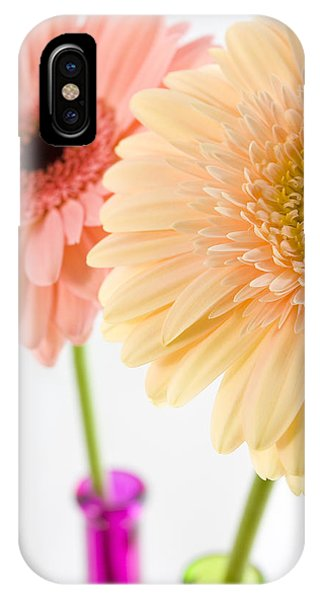 Peach And Pink Gerbera IPhone Case