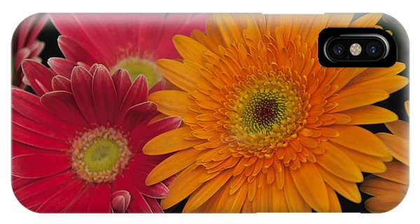 IPhone Case featuring the photograph Gerbera by William Norton