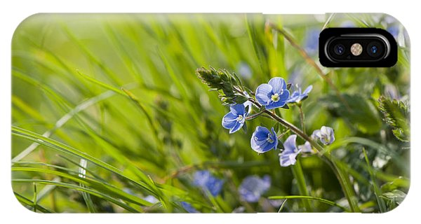 Close Focus Floral iPhone Case - Germander Speedwell by Anne Gilbert