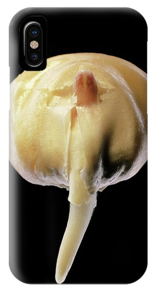 Monocotyledon iPhone Case - Germination Of A Maize Seed by Dr Jeremy Burgess/science Photo Library.