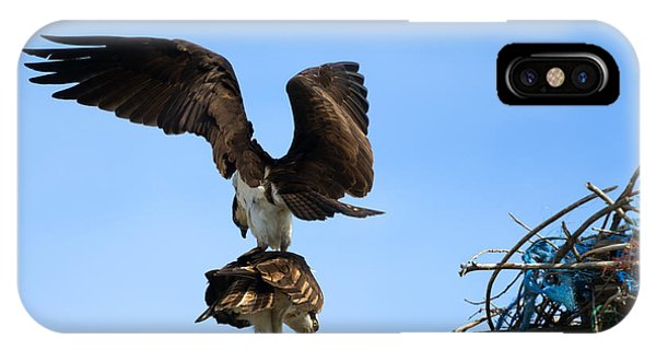 Ospreys iPhone Case - Get Off My Back by Mike  Dawson
