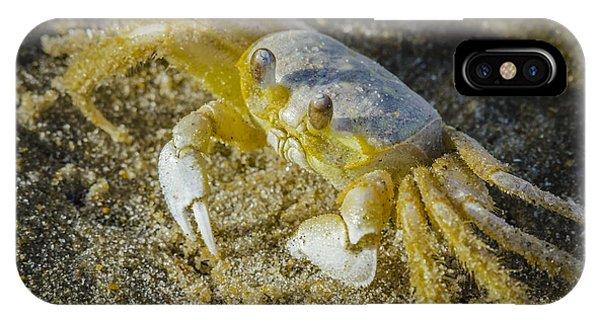 Ghost Crab IPhone Case