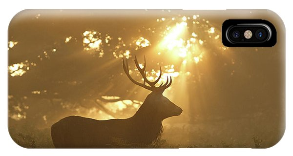 Stag iPhone Case - Ghost Of The Forest by Greg Morgan