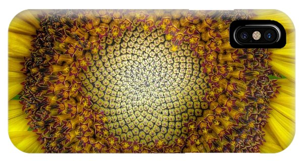 Sunflower Seeds iPhone Case - Ghost Sunflower by Marianna Mills