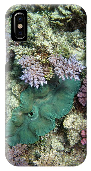Barrier Reef iPhone Case - Giant Clam, Agincourt Reef, Great by David Wall