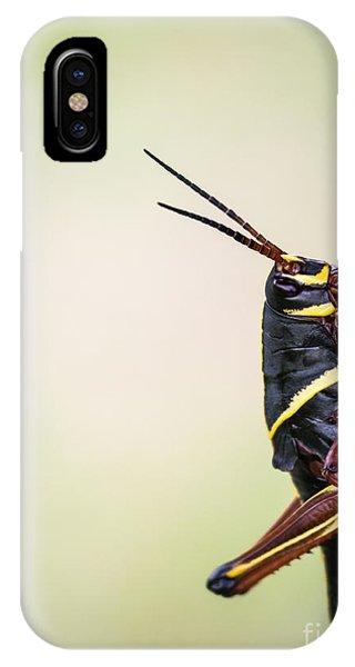 Grasshopper iPhone Case - Giant Eastern Lubber Grasshopper by Edward Fielding