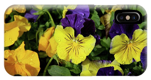 Giant Garden Pansies IPhone Case