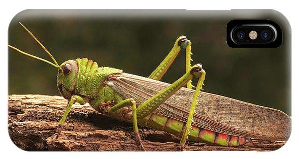 Grasshopper iPhone Case - Giant Grasshopper by Ktsdesign