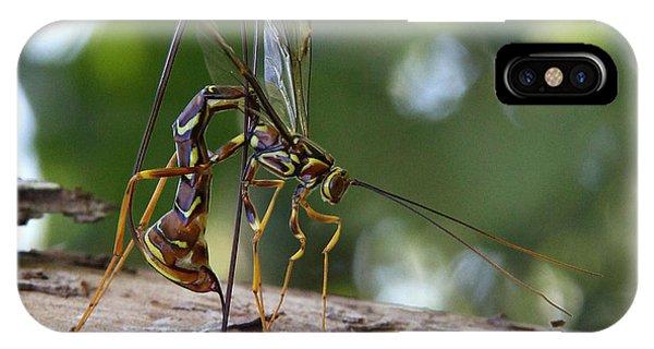 Giant Ichneumon Wasp IPhone Case