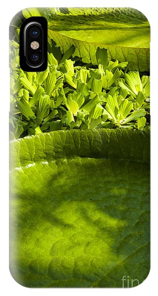 Giant Lily Pad Victoria Amazonica IPhone Case