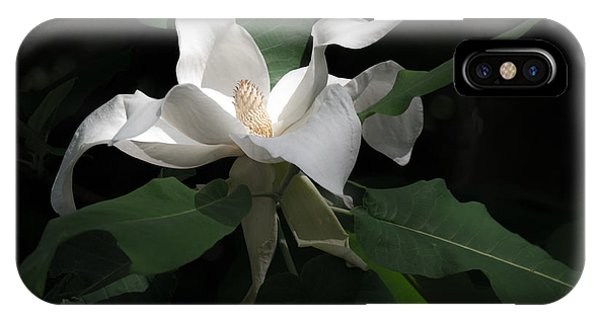 Giant Magnolia IPhone Case