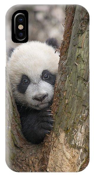 Giant Panda Cub Bifengxia Panda Base IPhone Case