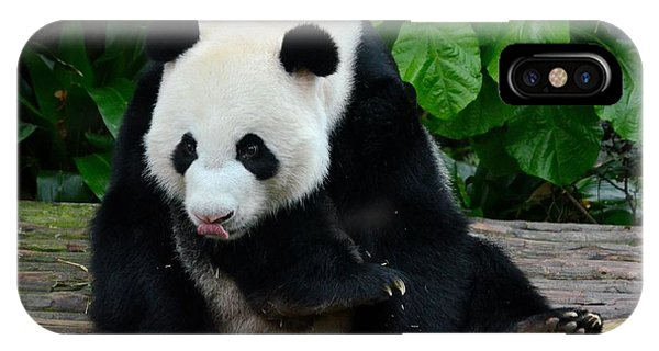 Giant Panda With Tongue Touching Nose At River Safari Zoo Singapore IPhone Case