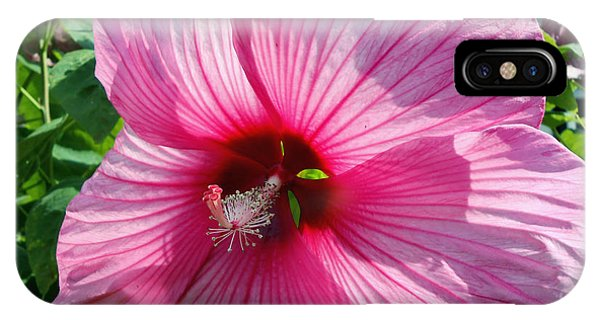 Giant Pink Hibiscus IPhone Case