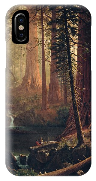 Giant Redwood Trees Of California IPhone Case
