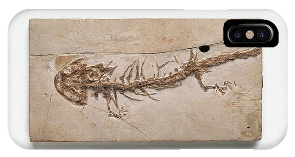 Salamanders iPhone Case - Giant Salamander Fossil by Dorling Kindersley/uig