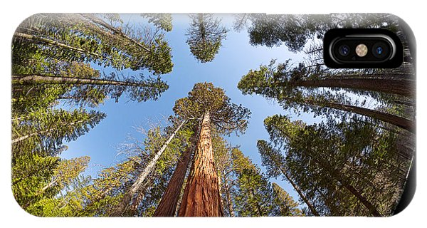 California iPhone Case - Giant Sequoia Fisheye by Jane Rix
