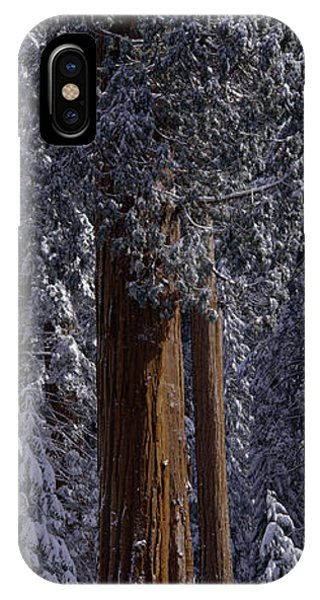 Kings Canyon iPhone Case - Giant Sequoia Tree Covered In Fresh by Greg Probst