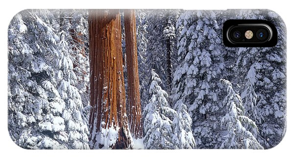 Kings Canyon iPhone Case - Giant Sequoia Trees Sequoiadendron by Panoramic Images