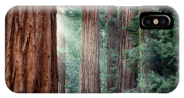 Giant Sequoias In Early Morning Light IPhone Case