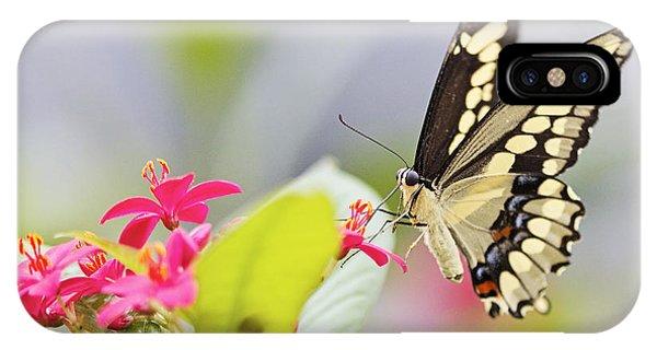 Giant Swallowtail II Phone Case by Pamela Gail Torres