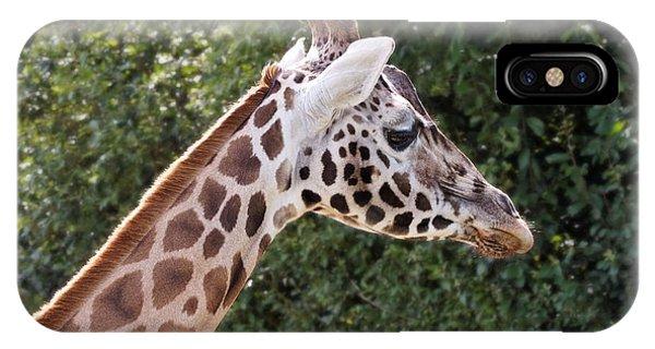 Giraffe 01 IPhone Case