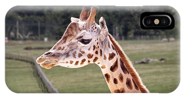 Giraffe 02 IPhone Case