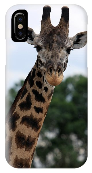 Giraffe iPhone Case - Giraffe  by Aidan Moran
