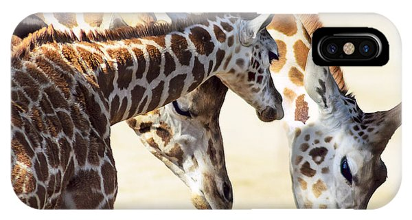 Giraffe iPhone Case - Giraffe Family by Camille Lopez