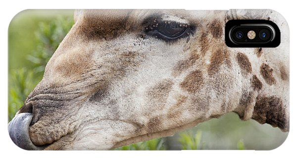 Giraffe With Tongue In Nostril Phone Case by Sean McSweeney